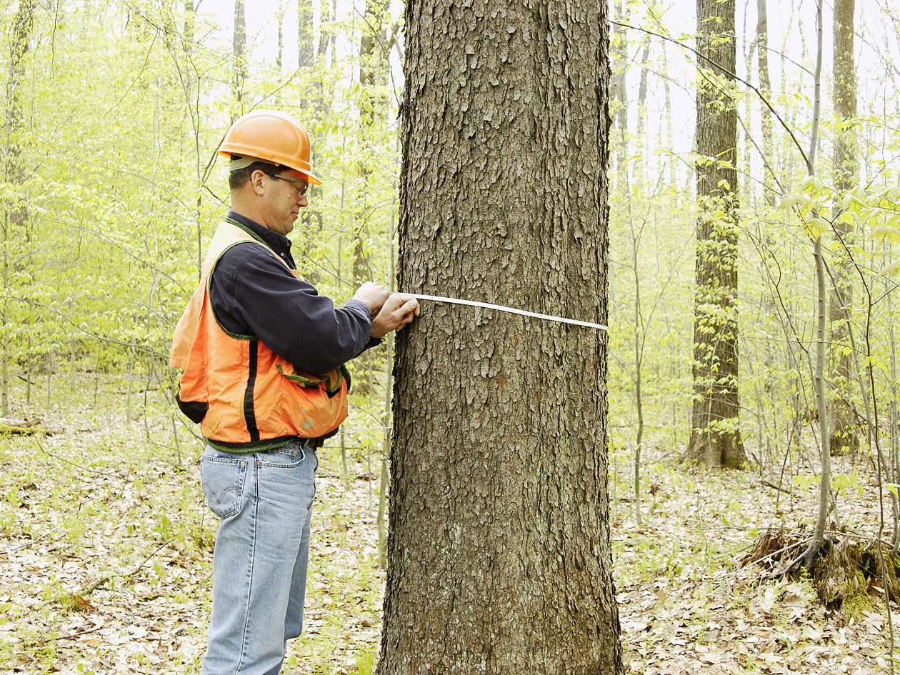 careers_forestry